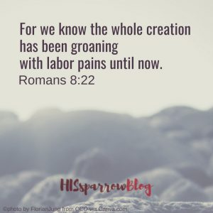 For we know that the whole creation has been groaning with labor pains until now. Romans 8:22